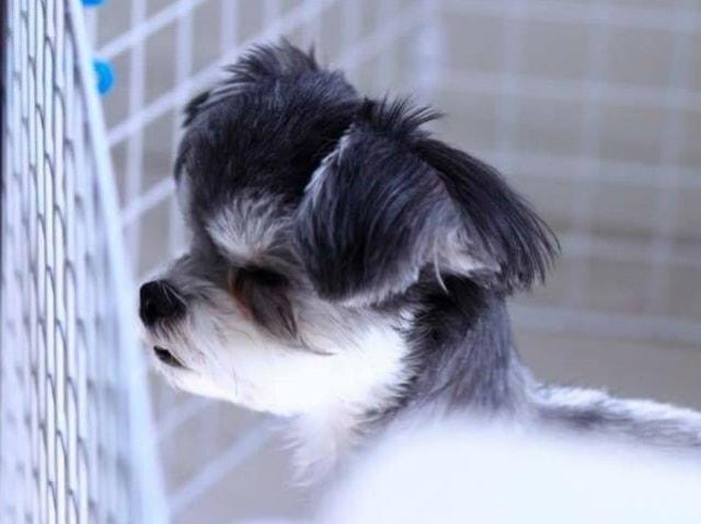 【ペット保険】ペッツベストのペット保険で安心を!