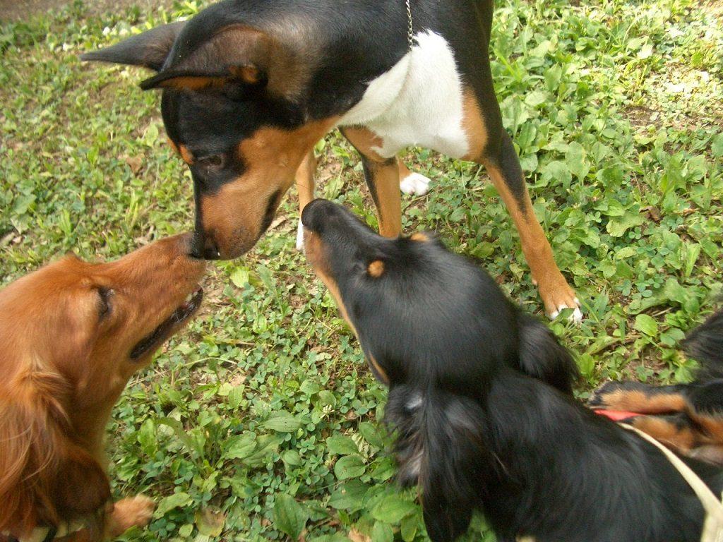 ペット保険の割引制度