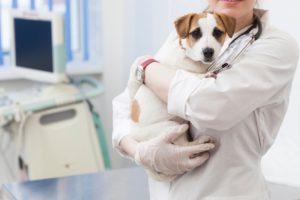 かわいい家族のためのペット保険