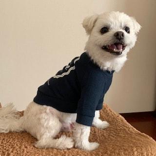 読者様の愛犬のご紹介
