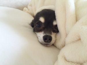 【ペット保険】ペット保険は飼い主の安心のための保険
