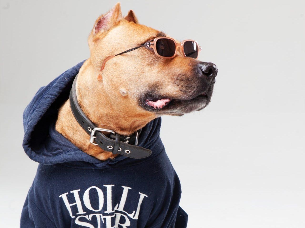 愛犬とのファッション