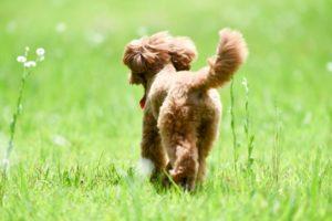 ペットの健康のためのペットグッズ