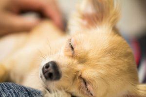 ペット保険の賢い選び方
