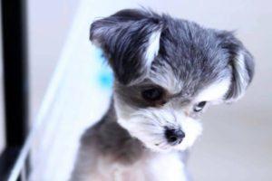 ペット保険の基礎知識