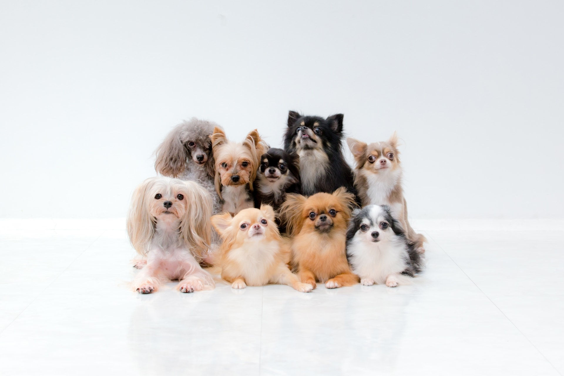 ペットを飼うための準備には何が必要?