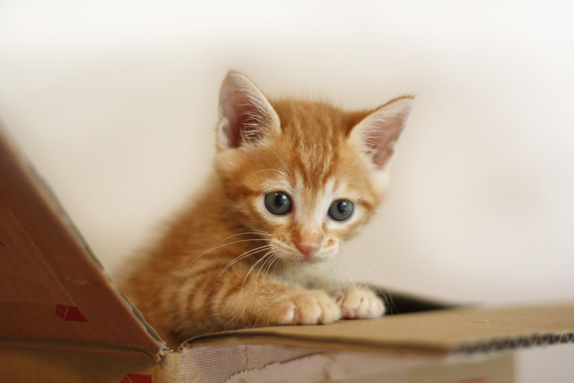 ペット保険の選び方のポイント