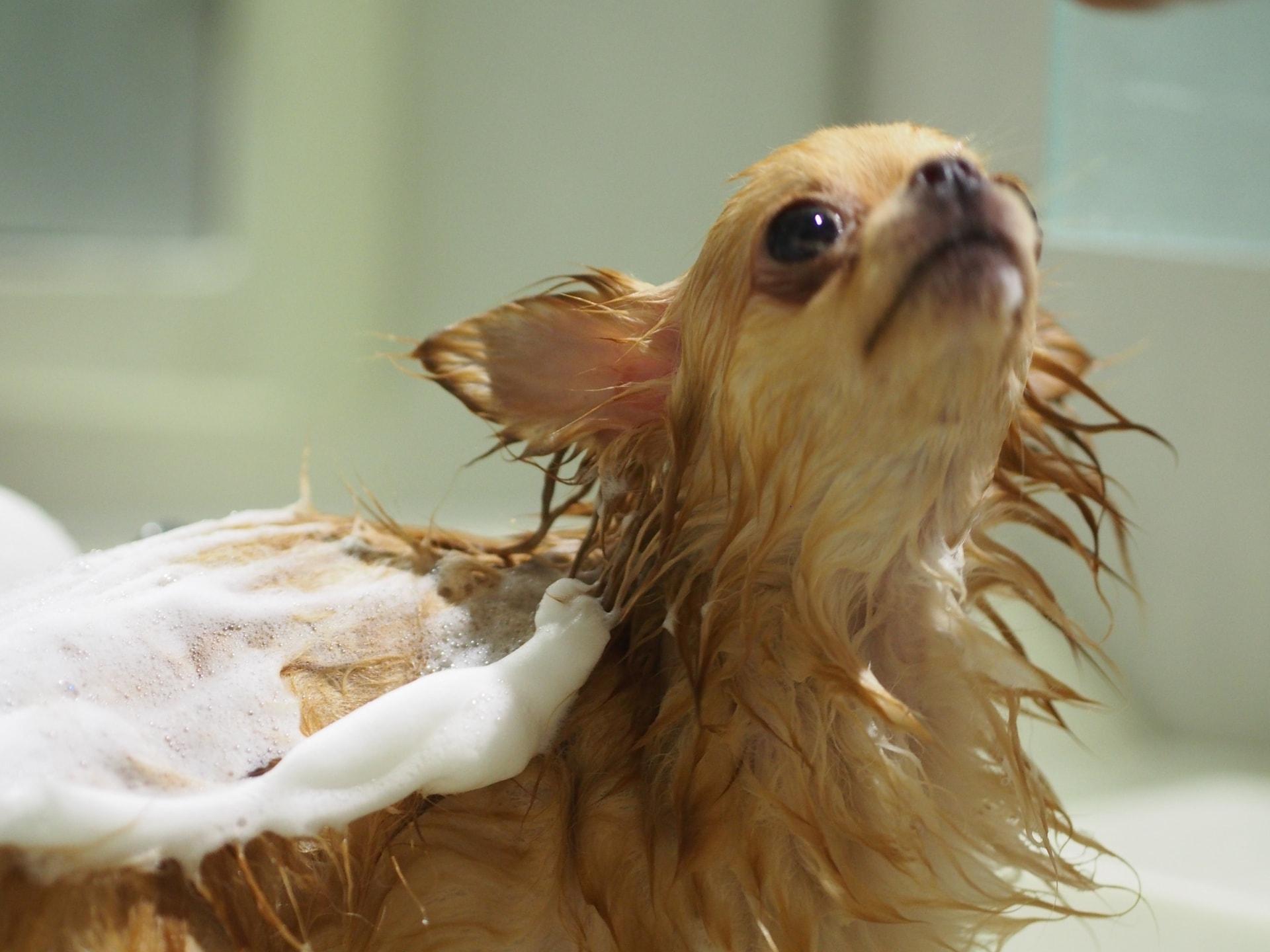 ペットを乾かす快適空間「ペットドライルーム」のご紹介