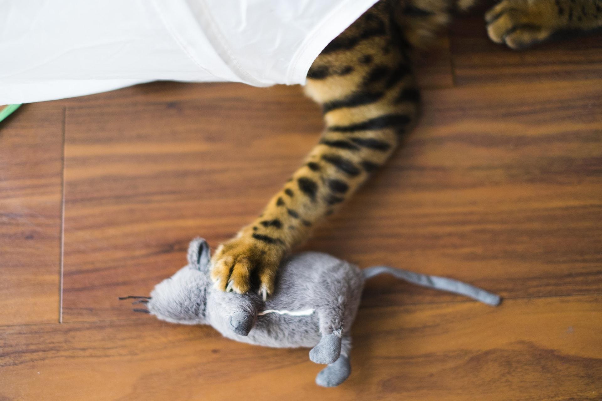 猫ちゃんと遊ぶ