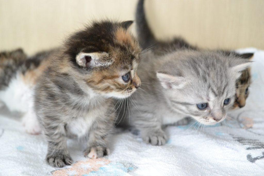 猫ちゃんがあなただけに表す愛情表現