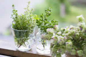 【健康 It's!】植物の力でセルフケア「手軽に健康ケア!」