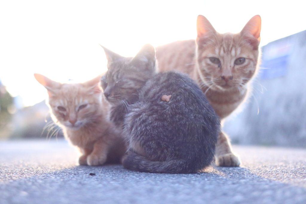 猫エイズについて