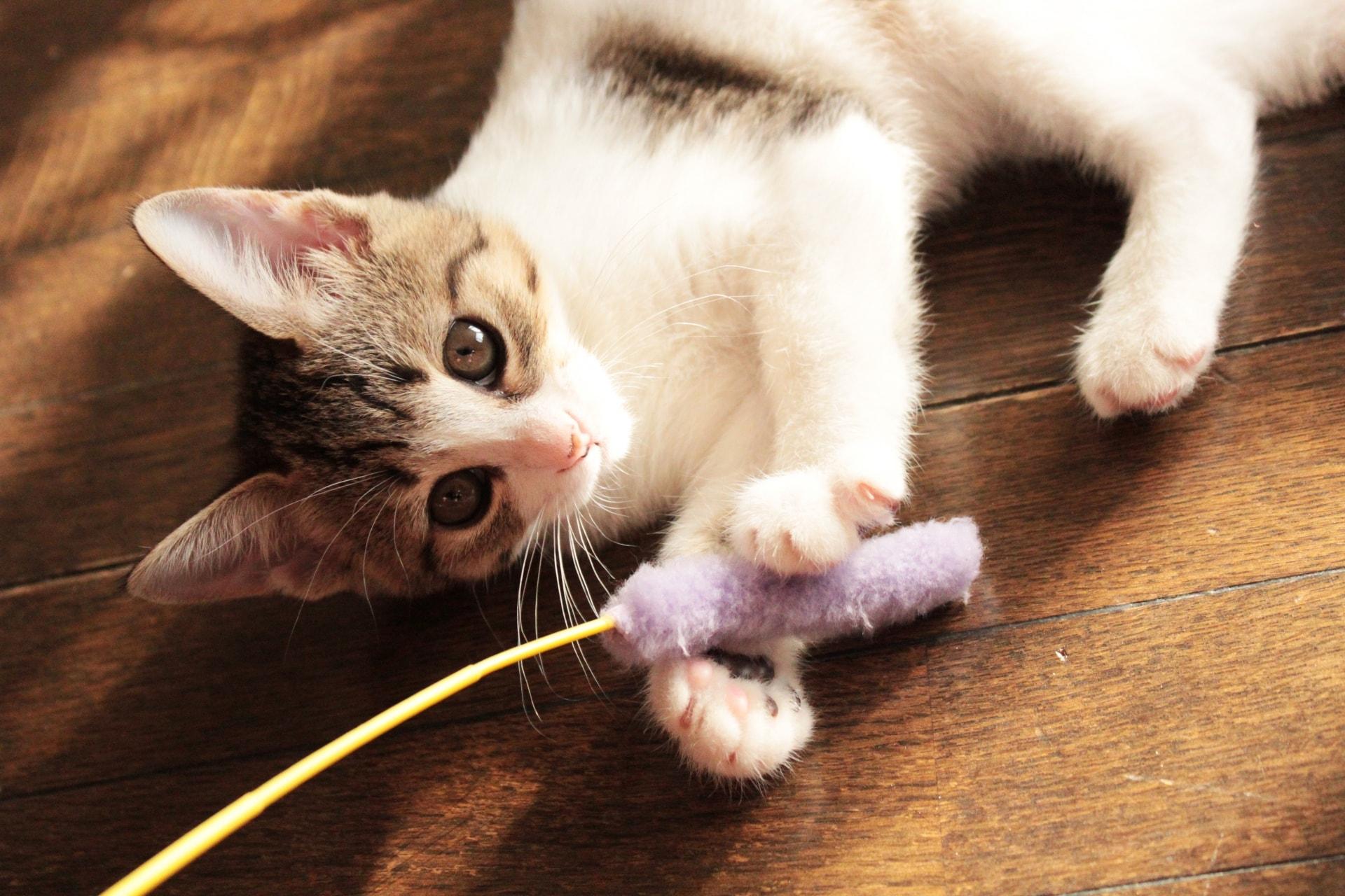 猫ちゃんが好むおもちゃ
