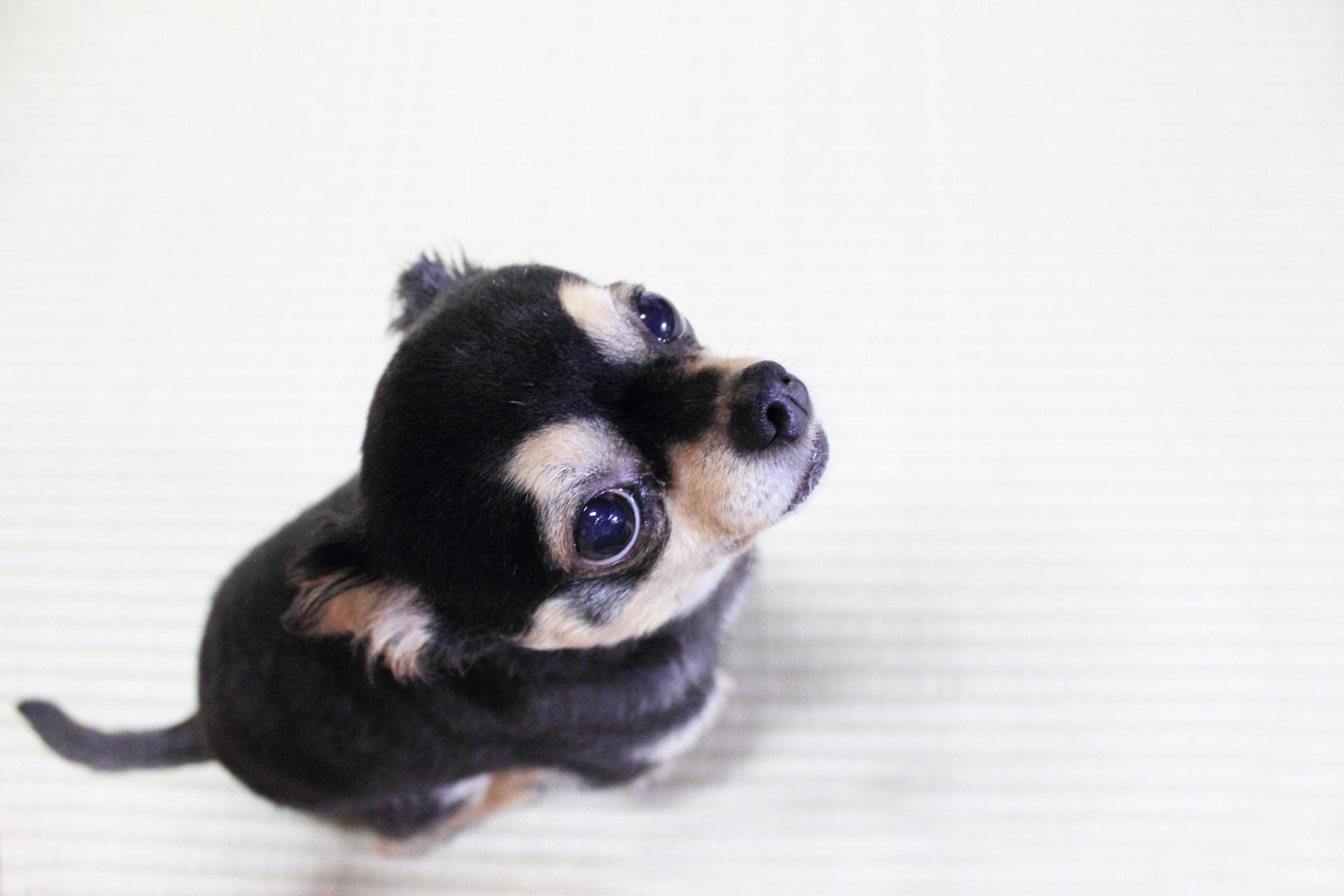 ペット保険の保険金の請求の手順