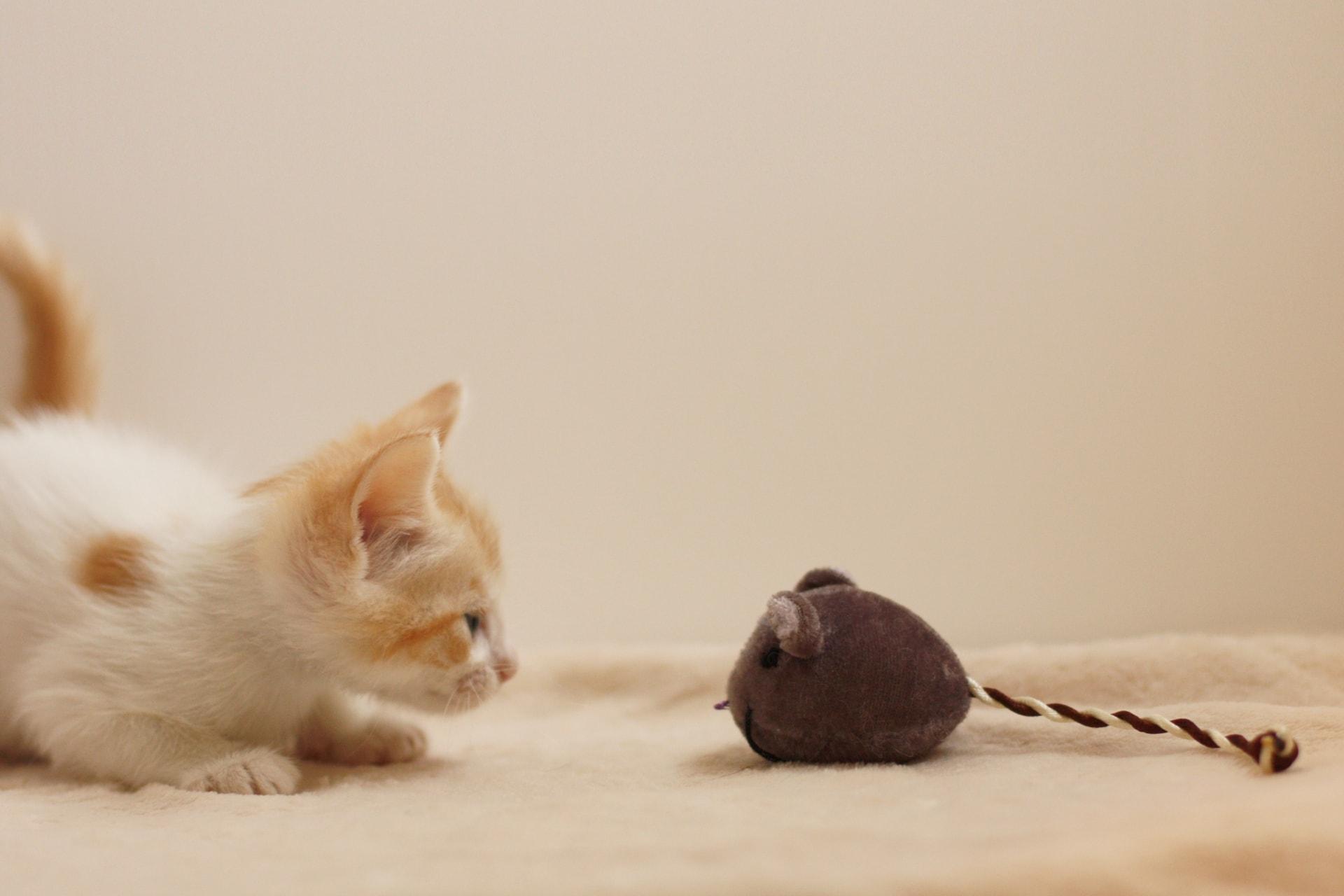 猫ちゃんの本能
