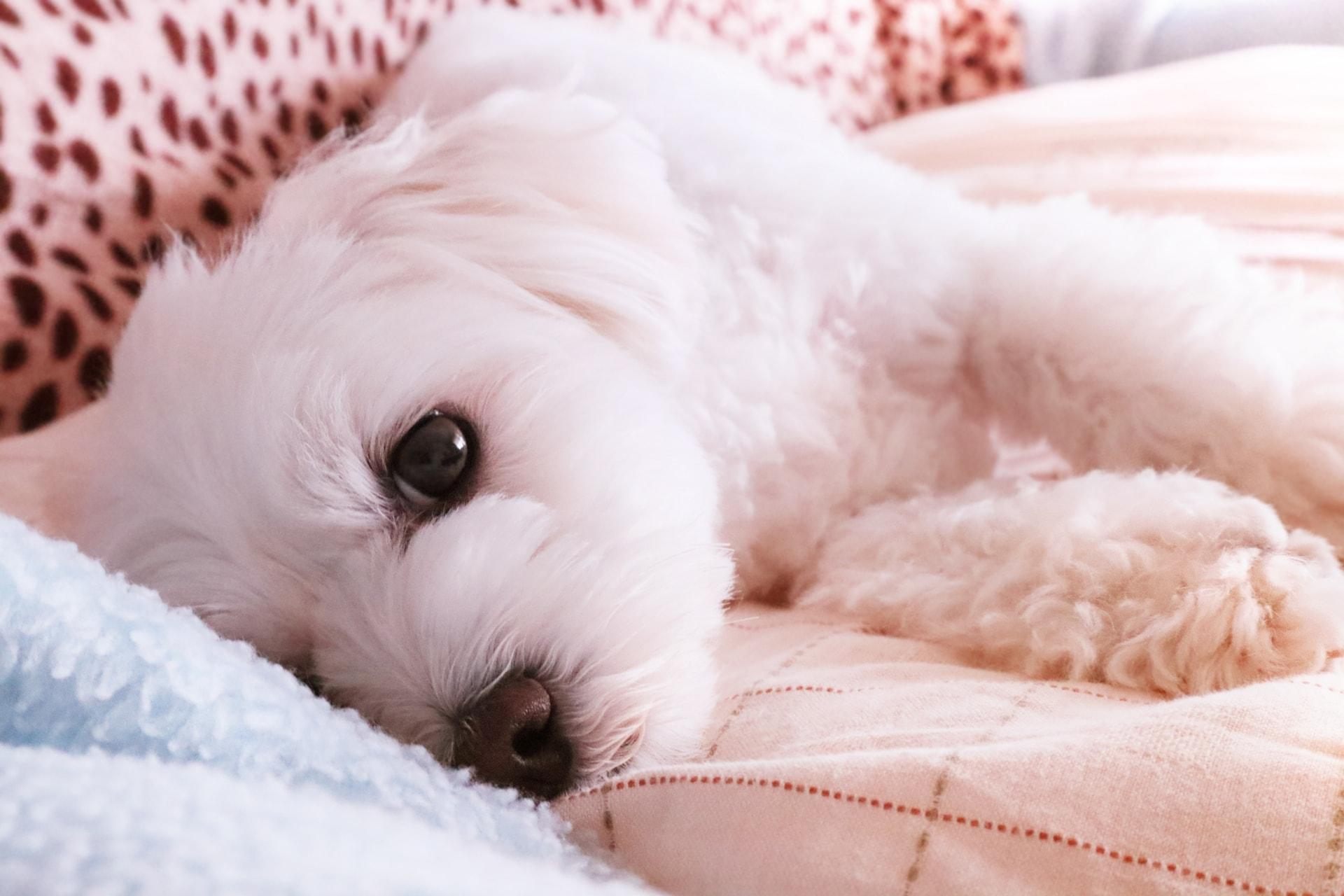 ペット保険の基本