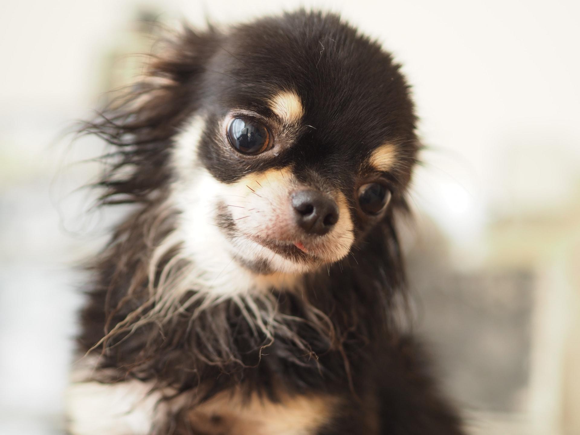 ペット保険の保険金はいくら支払われるの?