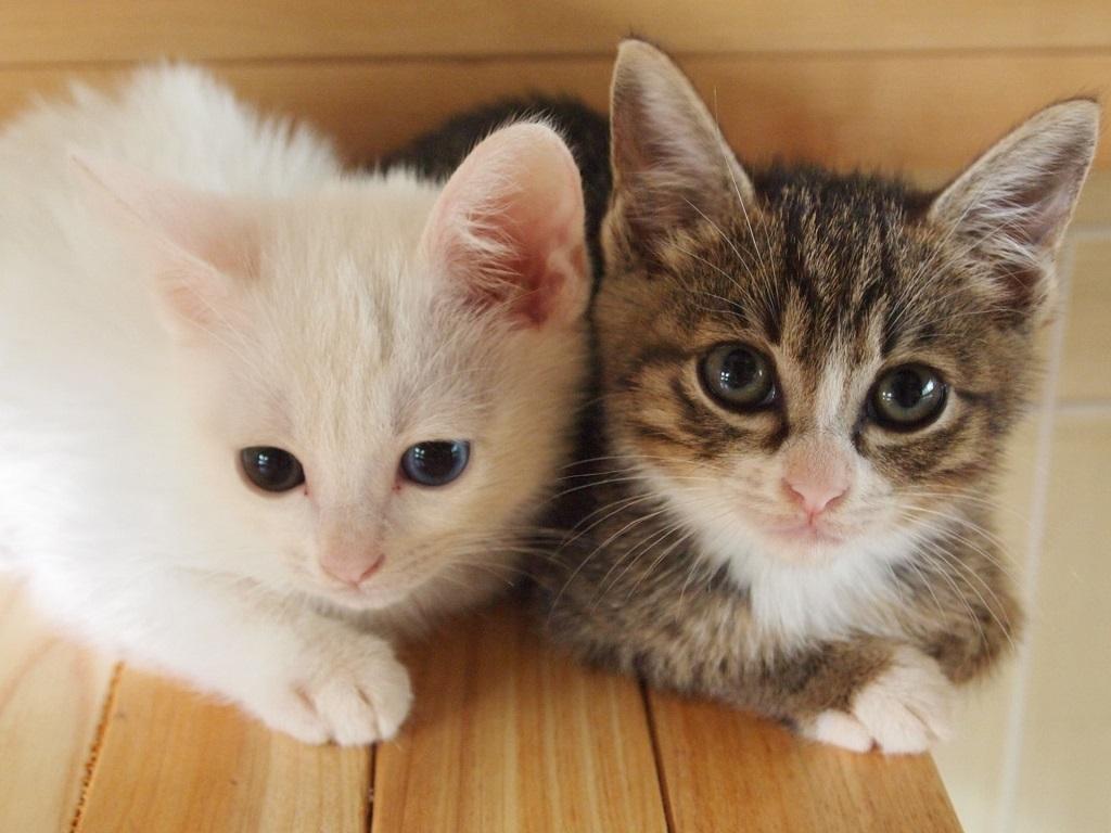 ペット保険の加入対象となる種類と年齢